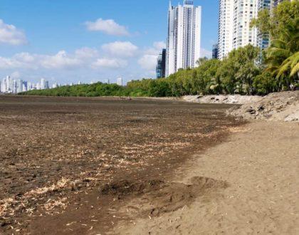 Voluntarios de la JMJ retiran 15 toneladas de basura de la playa Malecón